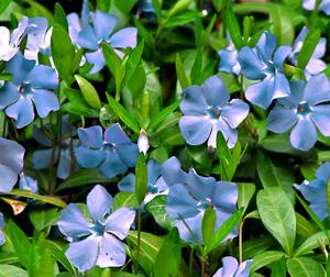 Садовые цветы и растения. 54