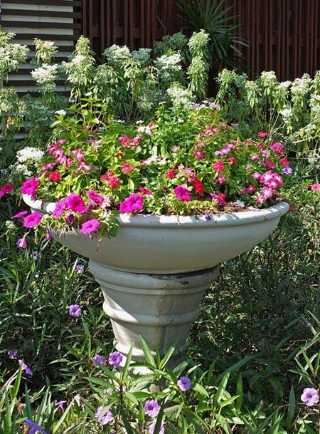 вазон с цветами фото