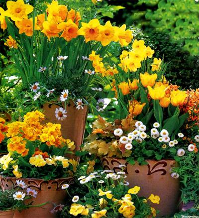 какие цветы посадить на балконе (2)