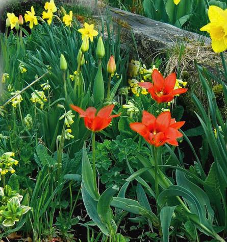 какие весенние цветы посадить