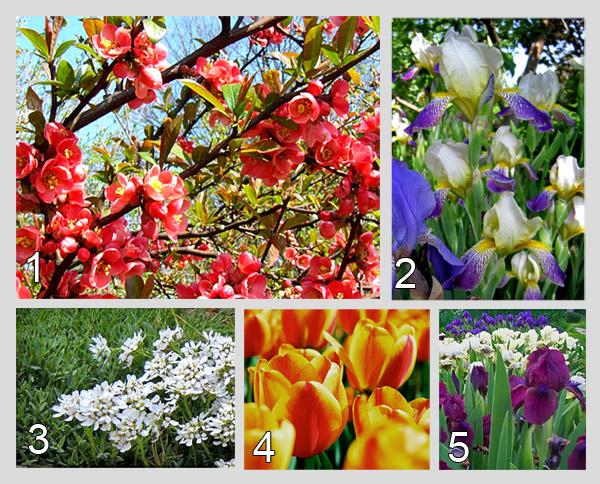 Цветы на дворе