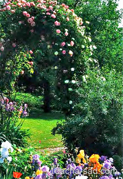 пергола увитая розами