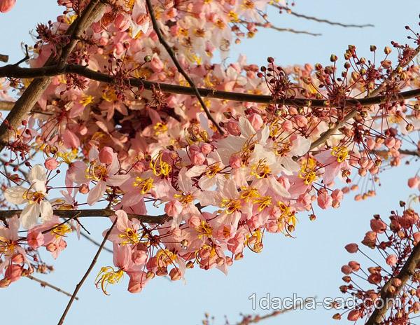 цветущие деревья фото (8)