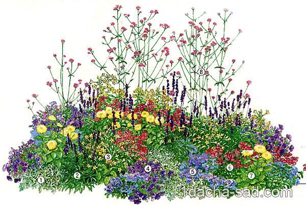 схема летнего цветника