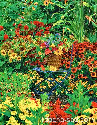 схема многолетнего цветника.