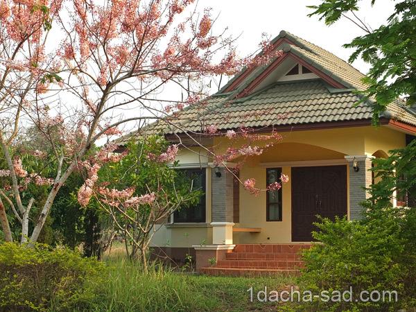 цветущие деревья фото (5)