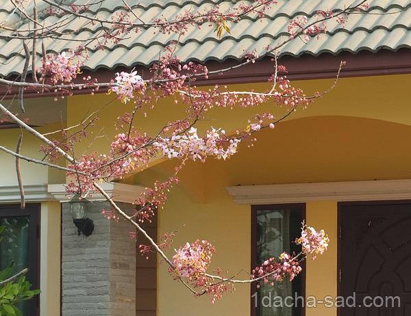 цветущие деревья фото (4)