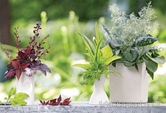 букеты из растений (3)