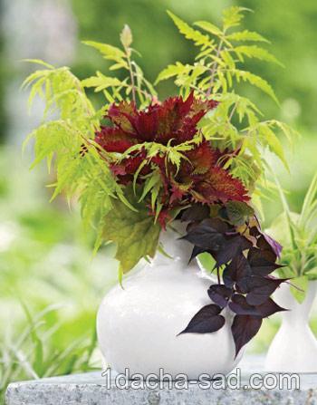 букеты из растений (2)