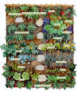 план посадок огород