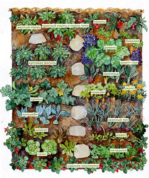 Эта небольшая грядка была запланирована согласно правильным принципам посадки смешанных овощных культур.