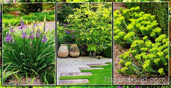 гравийный сад фото