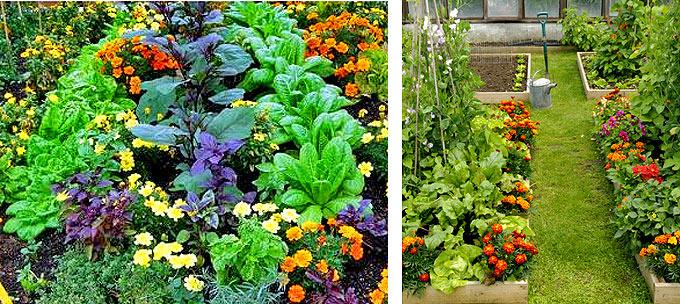 Вредителей и улучшат почву на грядке