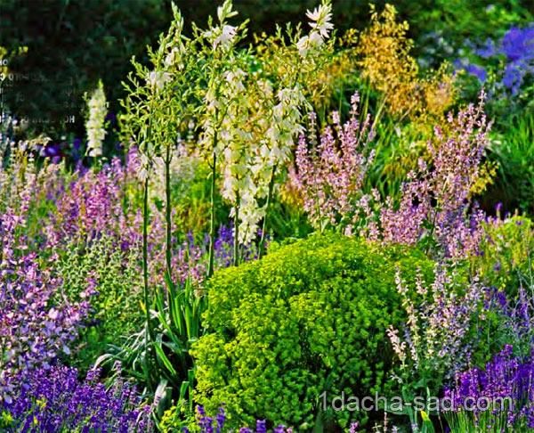 Неприхотливые многолетние цветы для
