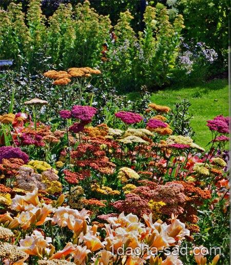 цветник из многолетников и трав