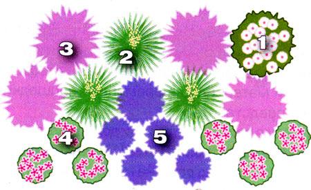 схема засухоустойчивого цветника на даче