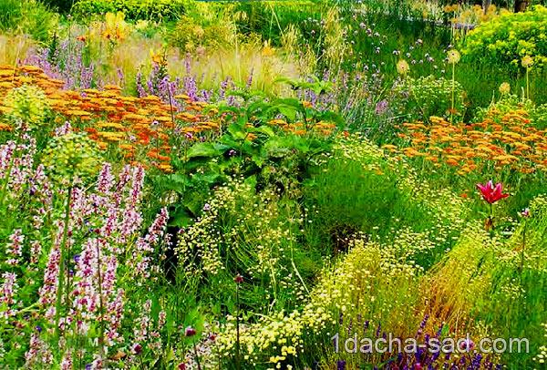 неприхотливые многолетние цветы для дачи (2)