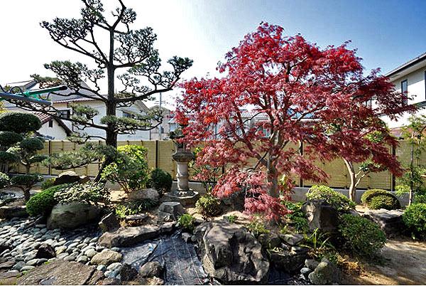 японский сад на даче фото (9)