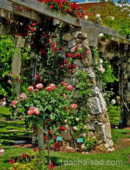 красивый розарий фото (12)
