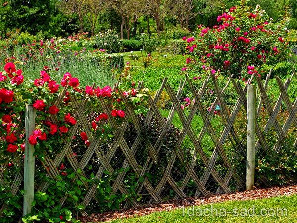 красивый розарий фото (9)