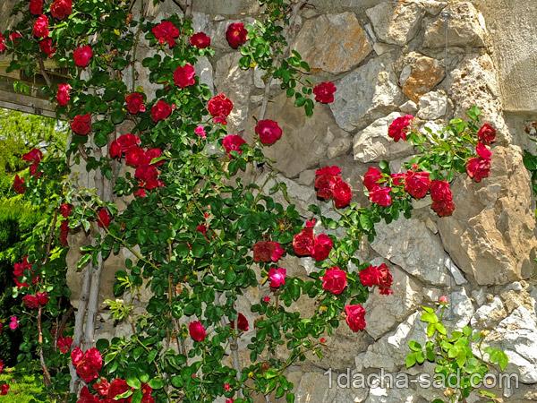 красивый розарий фото (7)