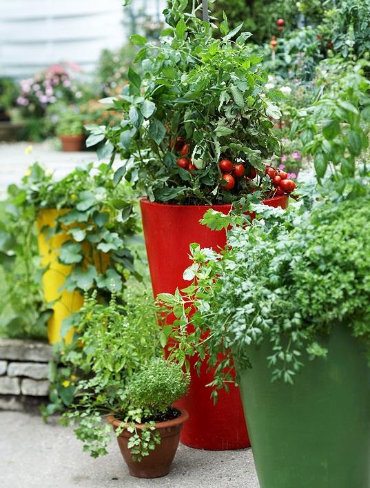контейнерный огород (6)