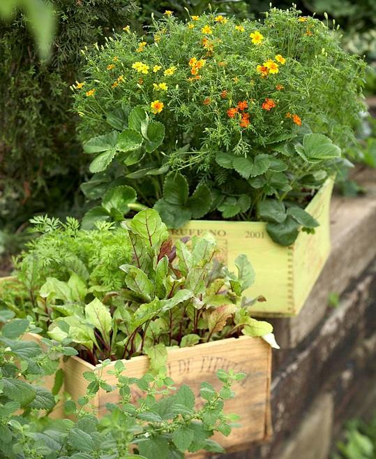 контейнерный огород (3)