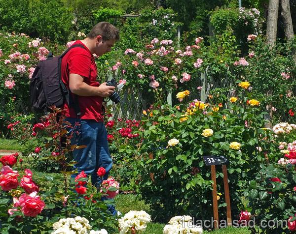 красивый розарий фото (5)