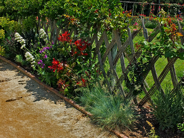 красивый розарий фото (3)