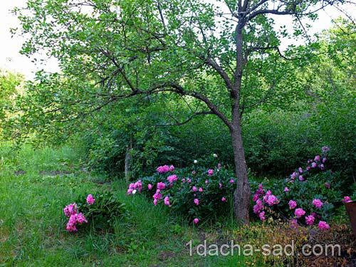 работы летом в саду
