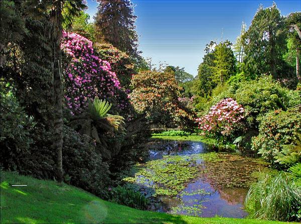 затерянные сады хелигана (3)