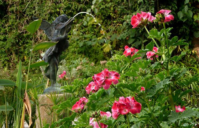 затерянные сады хелигана (2)