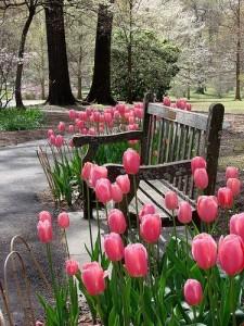 Скамейка в тюльпанах