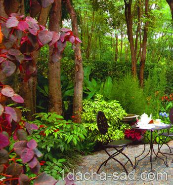 красивый сад фото (12)