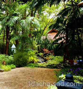 красивый сад фото (11)