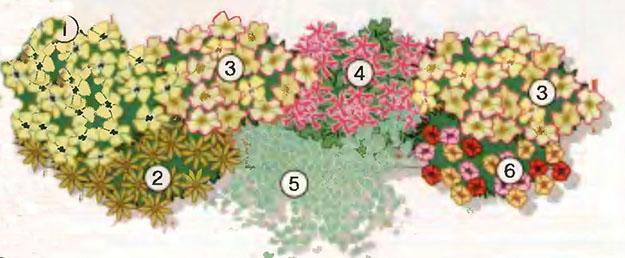 Ампельные цветы в озеленении балконов и террас 2