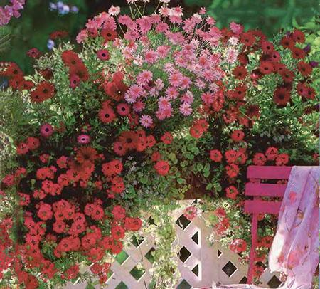 Ампельные цветы в озеленении балконов и террас 3