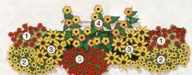Ампельные цветы в озеленении балконов и террас 8