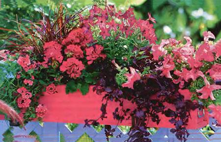 Ампельные цветы в озеленении балконов и террас 9