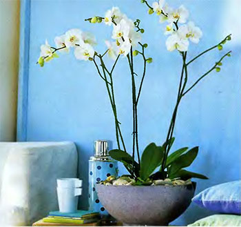 Как ухаживать Уход за орхидеей в домашних условиях свет