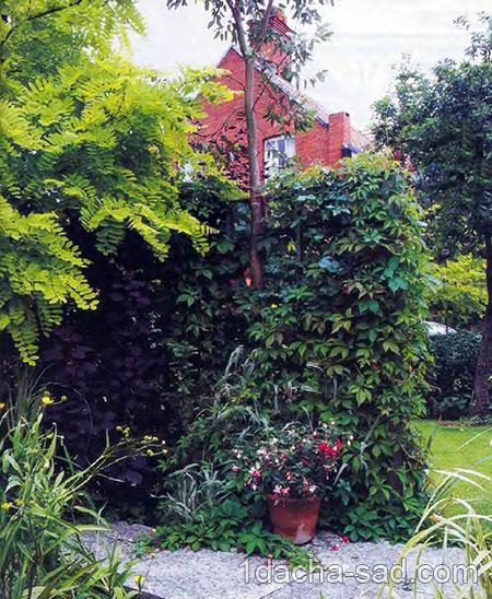 Растения и кустарники для живой изгороди 1