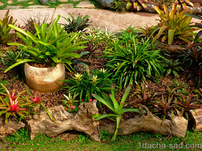 красивый сад Mae Fah Luang (2)