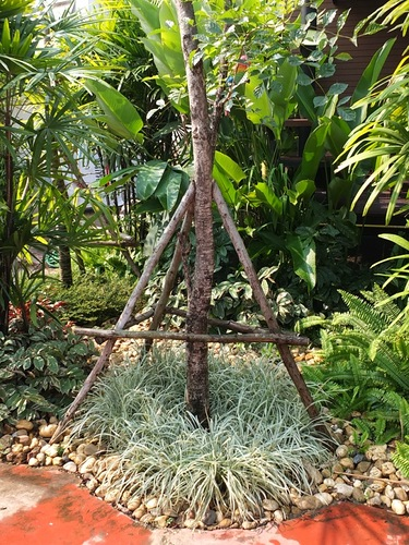Декоративная трава под деревом