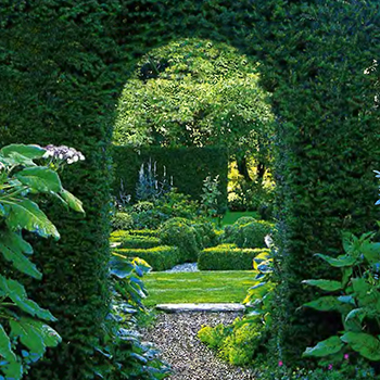 Растительная арка 4
