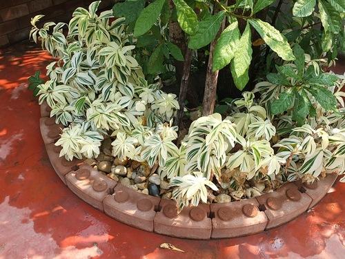 Декоративнолиственные растения и мульчирование галькой