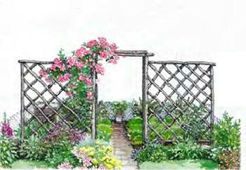 Растения и кустарники для живой изгороди 7