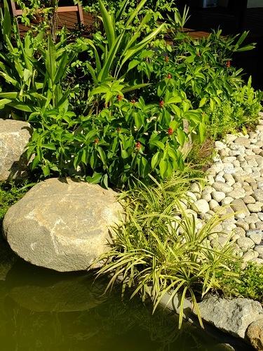 Декорирование берега ручья