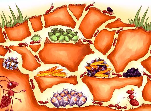 Схема план муравейника 3