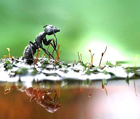 Как избавиться от садовых муравьев 5