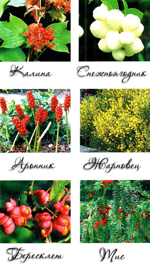 Опасные ядовитые растения